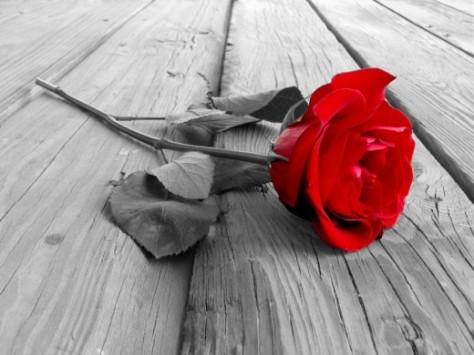 Rose_single